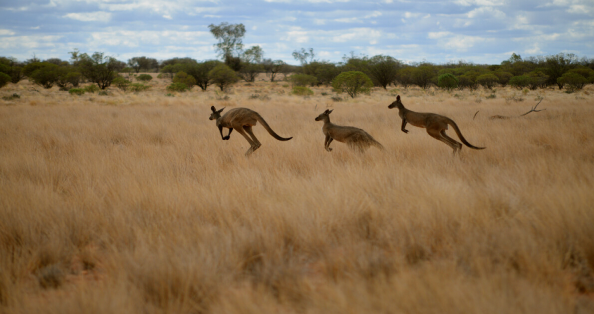 Australia Safari Holiday Travel & Tour Package