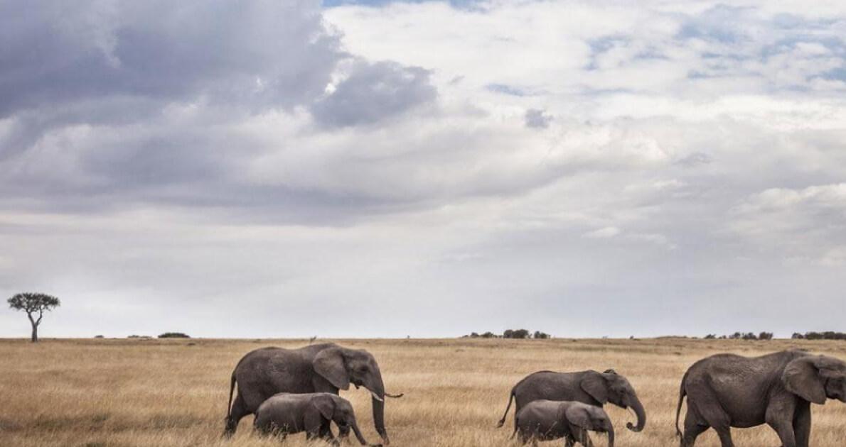 Kenya Safari Holiday Travel & Tour Package