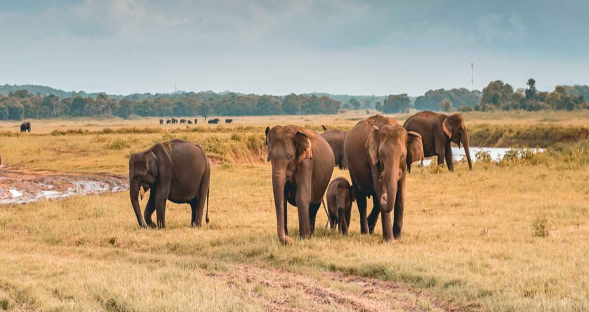 Srilanka Safari Holiday Travel & Tour Package