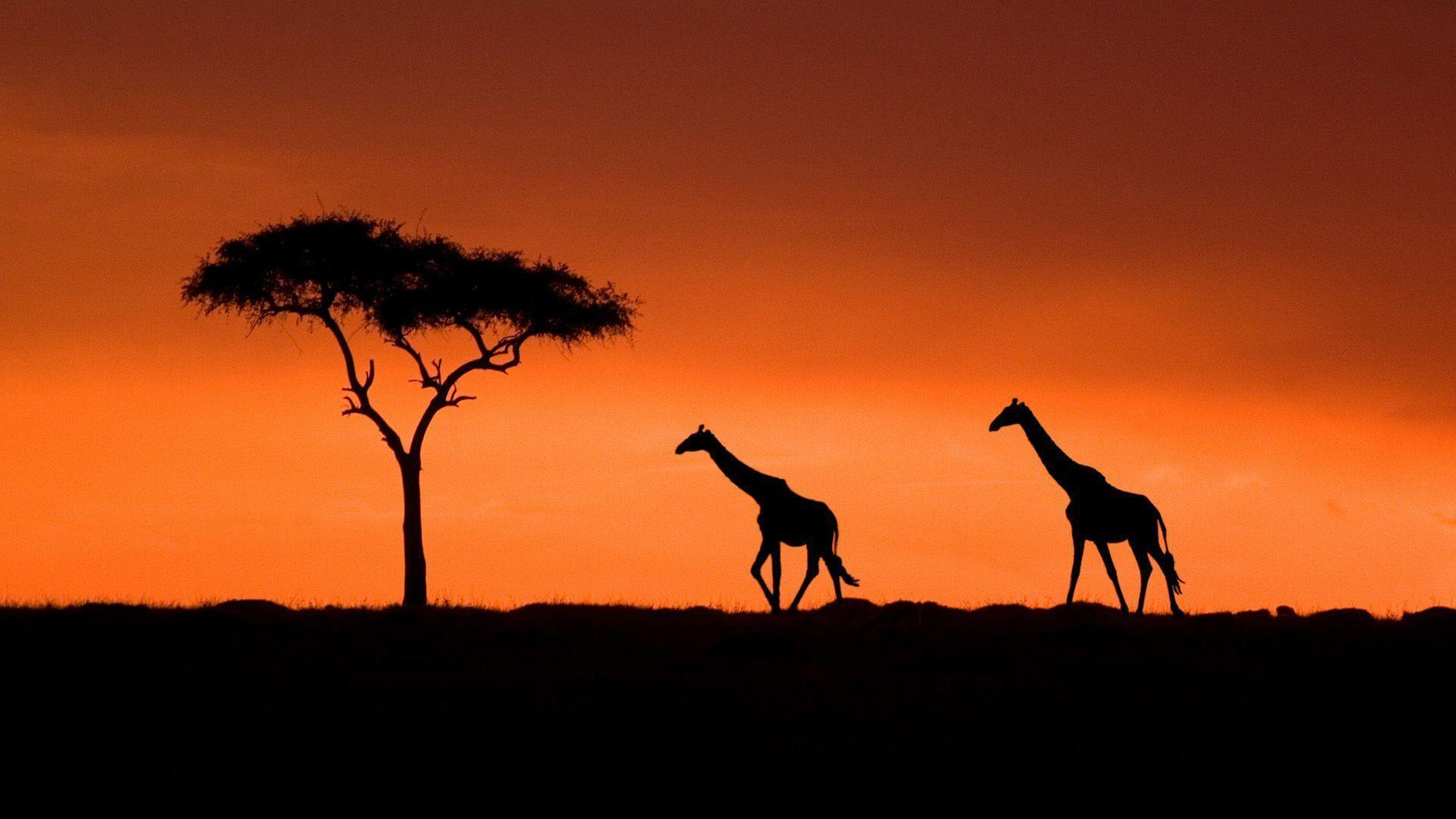 Honeymoon In KENYA Holiday Travel & Tour Package