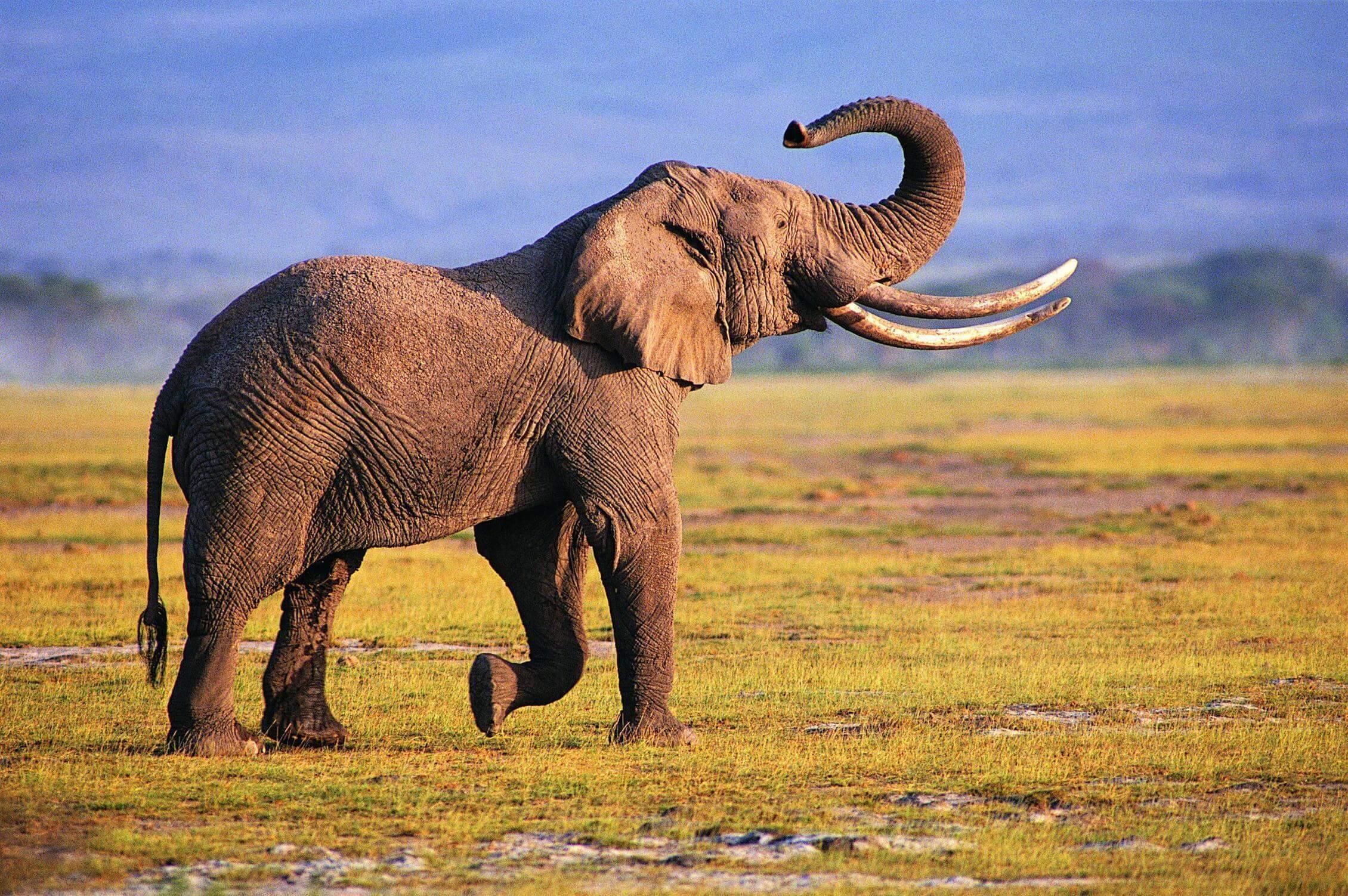 5 Days Kenya Holiday Travel & Tour Package
